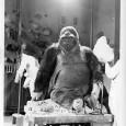 Die Dermoplastik des Gorillas Bobby entsteht