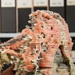 Wachsmodell von Schädelskelett, Gehirn und Hirnnerven einer Lungenfisch-Larve (Ceratodus forsteri), angefertigt von P. Bartsch