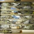 In dieser Schublade wird der Ou im Museum aufbewahrt