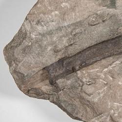 Rippenknochenstück des Chirotheriums