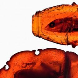 Gefälschte Fossilien in Baltischem Bernstein, aus der Bernsteinsammlung von Georg Carl Berendt (Danzig)