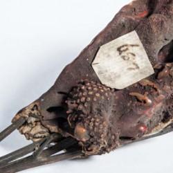 Übersinterte Mariendistel, ein versteinerter Blumenstrauß der als Souvenir hergestellt wurde