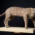 Ozelot, Leopardus pardalis, Präparat von 1819