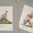 Gestickte Vogelbilder, angefertigt von Angelica Rosa im 18. Jh.