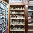 In der Trockensammlung des Museums