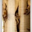 Felsenschildeidechse Gerrhosaurus robustus, gesammelt von Peters im heutigen Mosambik