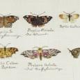 Gestickte Schmetterlinge, ebenfalls angefertigt von Angelique Rosa, 1781