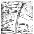 Schönleins Zeichnung des Schachtelhalms (Lithographie)