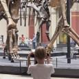 Nicht nur der große Brachiosaurus überzieht sich mit Muskeln und Fleisch, auch Dicraesaurus, Elaphrosaurus, Allosaurus und Dysalotosaurus beginnen zu laufen.