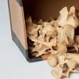 Pappkiste mit Knochen und Schädel des Beutelwolfs