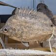 Dieser Fisch wurde vor 200 Jahren in Japan gefangen und war ursprünglich für den Kochtopf gedacht.