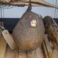 Die Fische der Sammlung Langsdorff wurden als Trockenpräparate aufbewahrt, was bei Fischen selten gemacht wird.