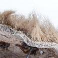Obwohl Haut und Fell so gut erhalten sind, lebte dieses Riesenfaultier vor gut 10.000 Jahren