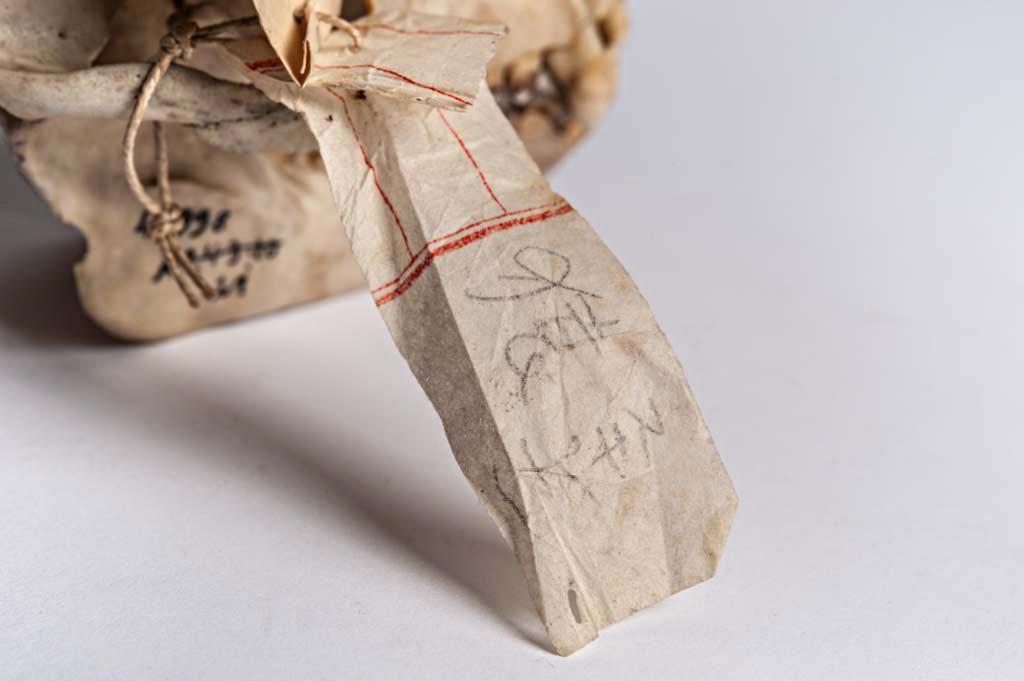 Japanisches Etikett von Macaca cyclopis » Wissensdinge