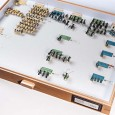 In dieser Schublade werden verschiedene Arten von Ameisen aufbewahrt - unter anderem die pilzbefallene Dinosaurier-Ameise