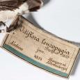 Historische Etiketten sind wichtige Herkunftsnachweise für Zoologen. Hier brachten sie die Forscher trotz der ungenauen Angaben auf die richtige Spur.