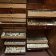 Die Raupensammlung von Otto Staudinger ist mit über 10.000 Exemplaren weltweit eine der größten und artenreichsten Sammlungen dieser Präparationstechnik. Sie wird am Museum in einem eigenen Sammlungsschrank aufbewahrt und noch heute zu Forschungszwecken genutzt.